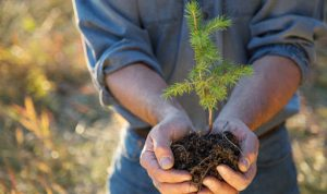 Stimulente pentru proprietarii de terenuri împădurite