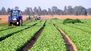 Fermierii cer europarlamentarilor să nu susţină reducerea utilizării pesticidelor