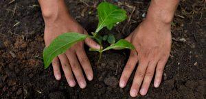 Sistem alimentar regenerativ la Nestlé